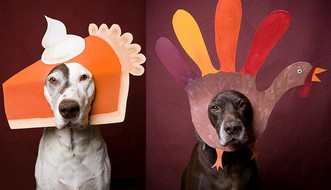 Thanksgiving Pet Toxins