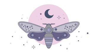 Moths in Your Backyard Lecture Tonight