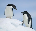 Penguins & Places: Antarctica